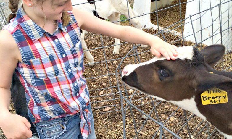 Family Farm Tour at Sunset View Creamery {Watkins Glen}