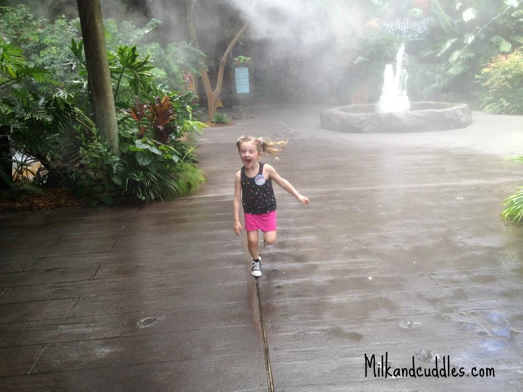 Rain FOrest Cafe Disney