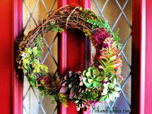 Make a Succulent Wreath