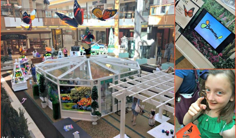 Butterfly Festival – The Shops at Willow Bend Plano