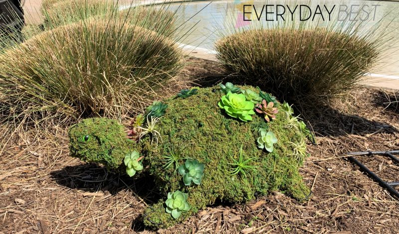 How to make a Succulent Topiary for your Garden!